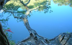 Serene Tree